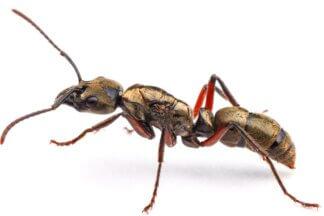 Kolonie mrówek